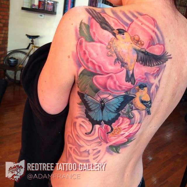 Adam-france-back-pink-birds