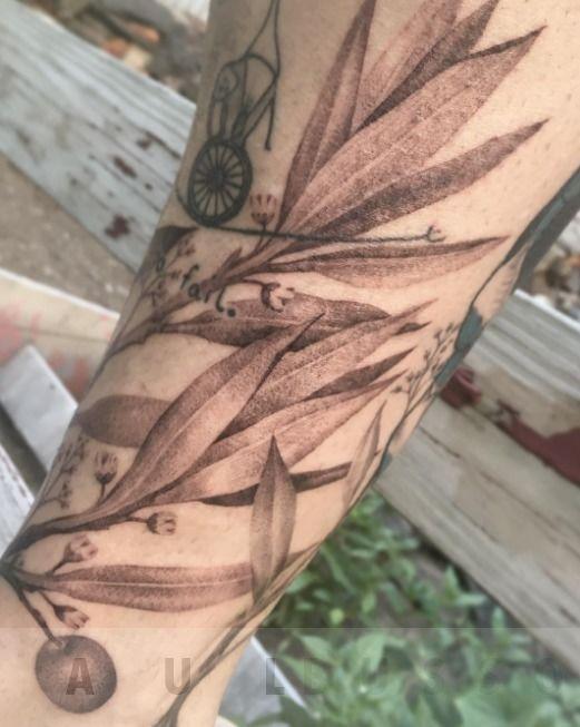 Olive_leaves
