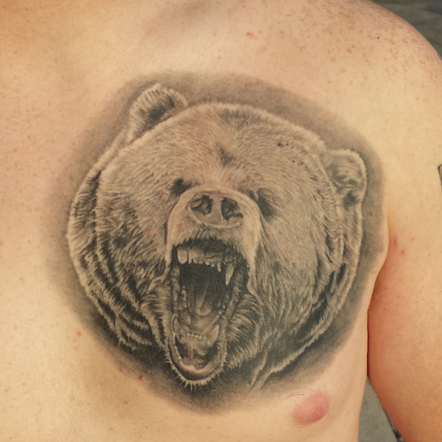 Bear_growl_2