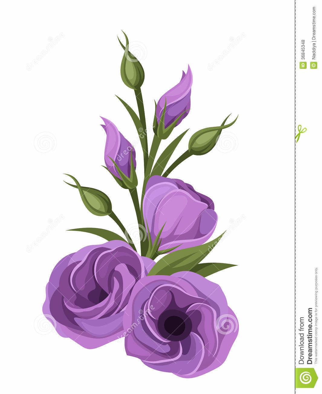 Purple-lisianthus-flowers-illustration-isolated-white-background-36845348